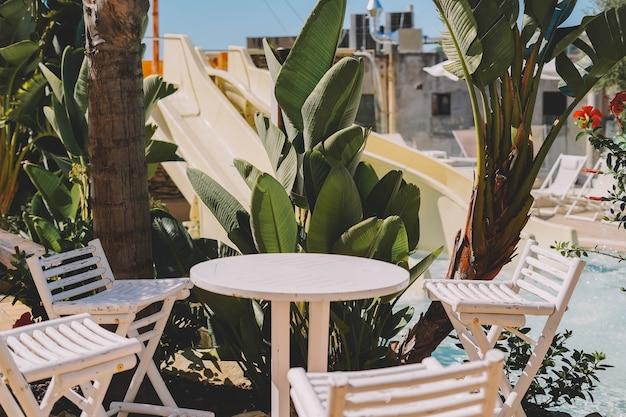 Imagem de plantas e palmeiras