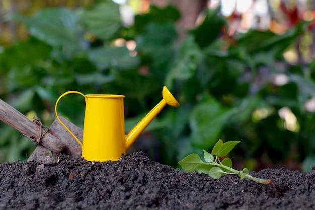 Imagem de se preparar para plantar árvores