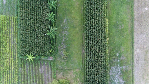 Imagem de um lindo campo de arroz em socalcos na estação das águas e irrigação do drone vista superior do arrozal em java na indonésia