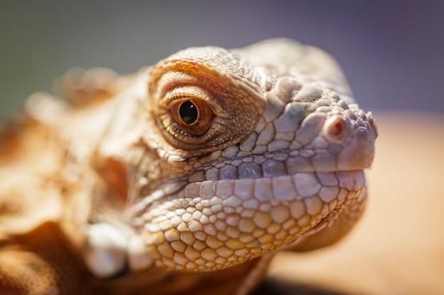 Imagem de uma cabeça de lagarto na natureza. réptil. animais.