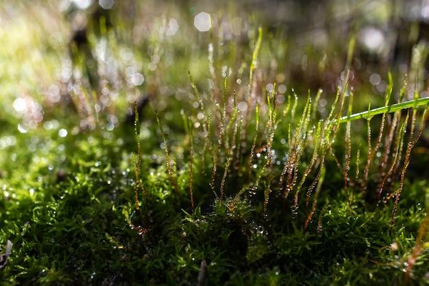 Imagem de uma floresta saudável com líquenes e musgos verdes cobertos de gotas de água da chuva