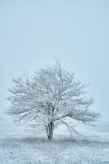 Imagem de uma grande árvore coberta por cristais de neve sozinha contra o céu claro