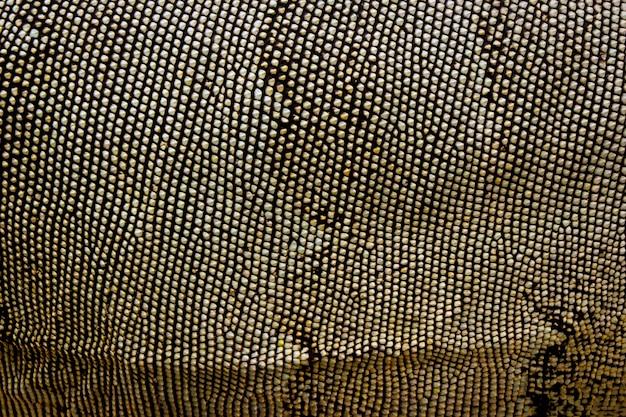 Imagem de uma pele de iguana. fundo de animais. animais selvagens.