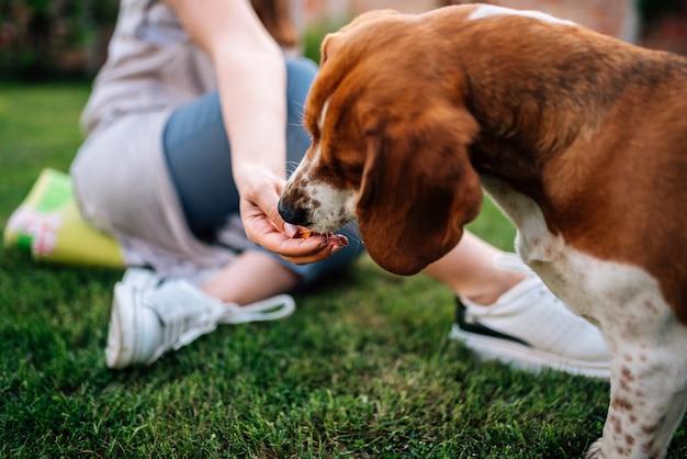 Imagem do close-up da pessoa fêmea que dá o petisco a um cão fora.