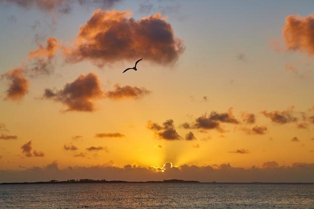 Imagem do pôr do sol dourado ou nascer do sol no oceano com a silhueta da gaivota
