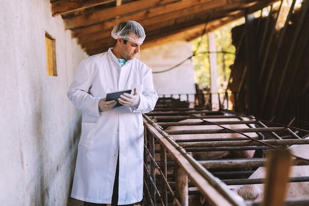 Imagem do veterinário masculino novo na roupa estéril branca que está no leitão.