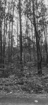 Imagem em preto e branco de árvores altas crescendo na beira da estrada na floresta
