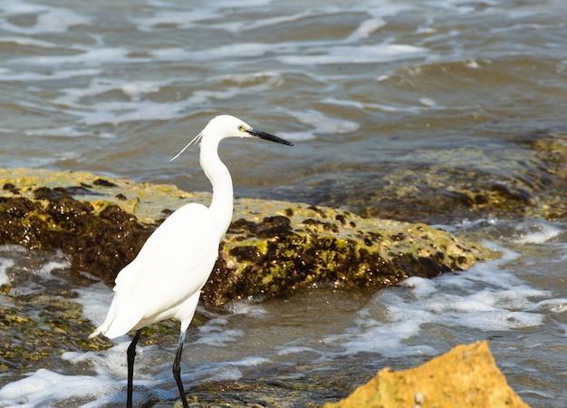 Imagem horizontal de uma garça posando à beira-mar entre as rochas.