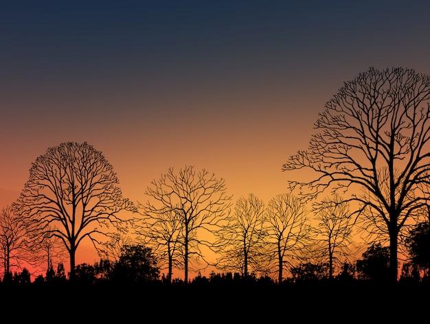 Imagem linda paisagem com silhueta de árvores ao pôr do sol
