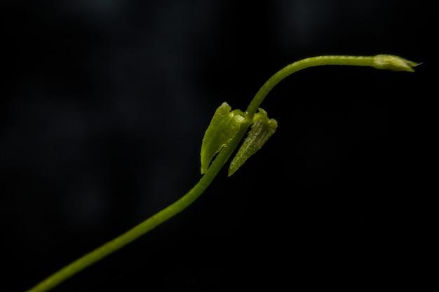 Imagem macro das veias da folha na obscuridade e luz - verde.
