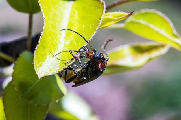 Imagem macro de um inseto em uma planta sob a luz do sol