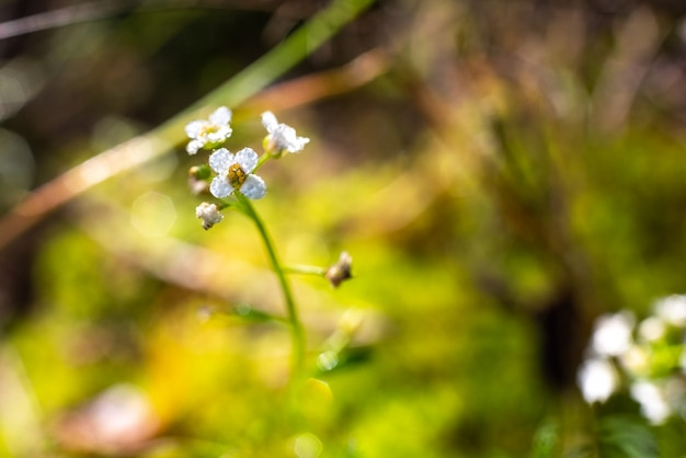 Imagem para inspirar o relaxamento, close-up da flor pequena coberta nas gotas de orvalho na terra de uma floresta.