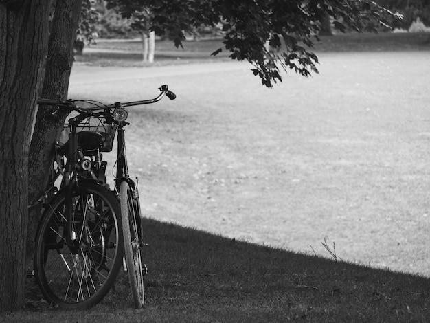 Imagem preto e branco de duas bicicletas por uma árvore em um parque