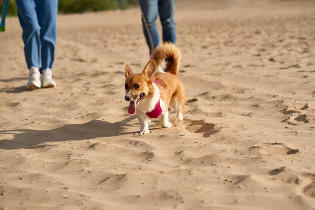 Imagem recortada de pessoas caminhando na praia com o cachorro.