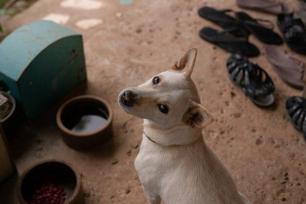 Imagem transversal branca da opinião superior do cão da raça.