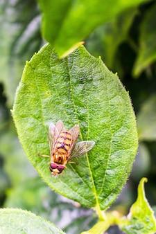 Imagem vertical aproximada de hoverflies em uma folha verde