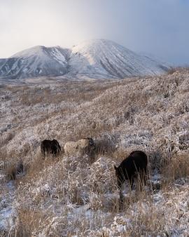 Imagem vertical de alguns cavalos pastando nos campos cobertos de grama perto de uma montanha