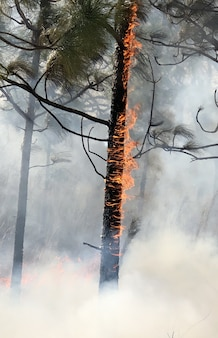 Imagem vertical de árvores em chamas em uma floresta coberta de fumaça