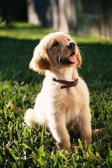 Imagem vertical de foco raso de um filhote de cachorro golden retriever fofo sentado em um gramado