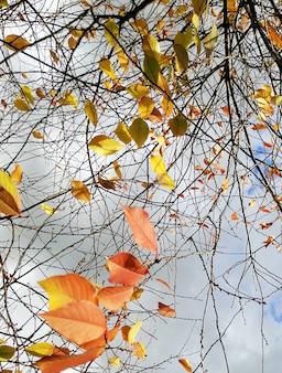 Imagem vertical de folhas coloridas em galhos de árvores sob um céu nublado durante o outono na polônia