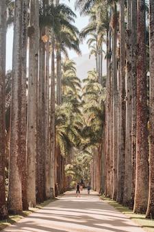Imagem vertical de um caminho cercado por palmeiras sob o sol no rio de janeiro