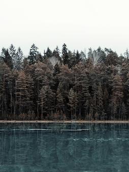 Imagem vertical de um lago cercado por uma floresta com árvores refletindo na água