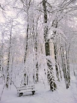 Imagem vertical de uma floresta cercada por árvores cobertas pela neve sob o sol na noruega
