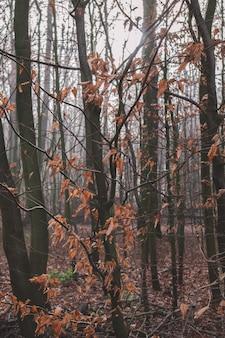 Imagem vertical de uma floresta coberta de folhas secas e árvores durante o outono