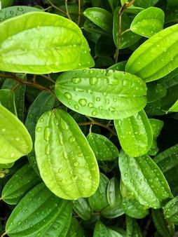 Imagem vertical em close das folhas molhadas de uma planta em um jardim, capturada em um dia ensolarado