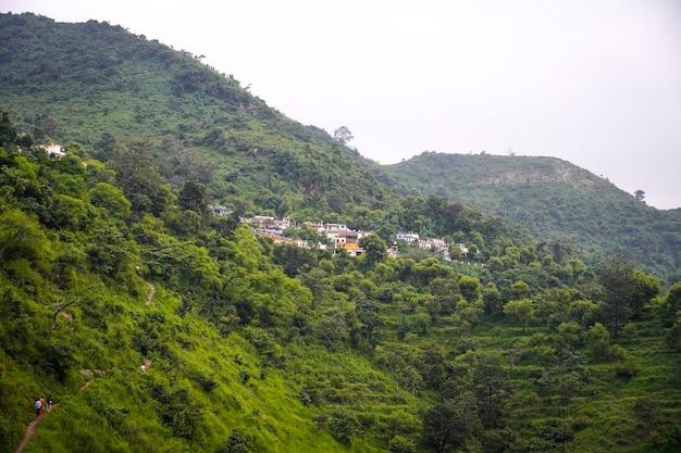Imagens da floresta com casa e árvores verdes