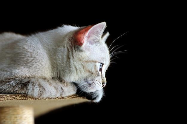 Imagens de close up vista lateral de um gato sentado na arranhador de gatos