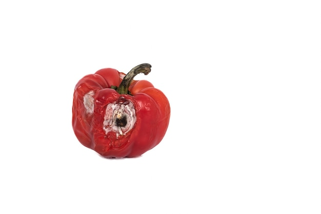 Imagens de objetos de pimentão vermelho podre no fundo branco isolado, para o conceito de pimenta podre.