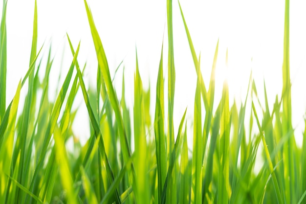 Imagens de plantas frescas, primavera