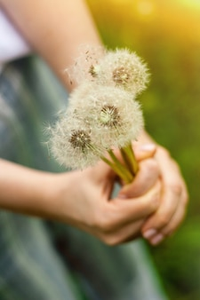 Imagens de verão linda de uma mão feminina segurando o dente de leão contra o fundo da grama
