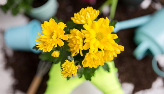 Imagine em cima das mãos da pessoa em luvas para transplantar flores