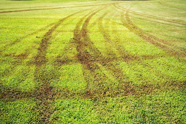 Impressão de roda em campo de grama