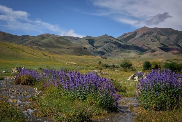 Impressionante paisagem montanhosa em um dia ensolarado de verão. em primeiro plano, plantas com flores azuis contra as montanhas e céu claro com nuvens brancas.