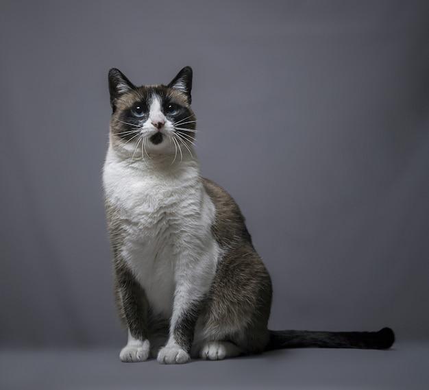 Impressionante retrato quadrado de um adorável gato fofo