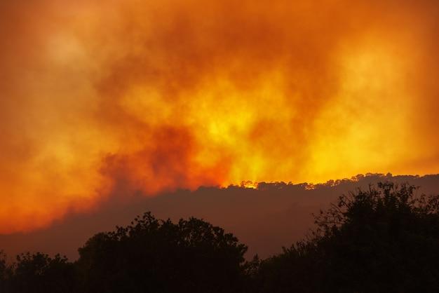 Incêndio florestal à noite à distância com silhuetas de árvores contra o dramático céu vermelho
