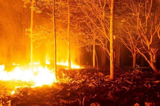 Incêndio florestal, incêndio.