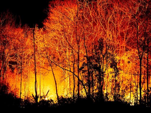 Incêndio florestal queimando à noite.