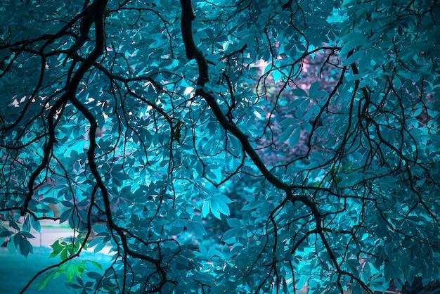 Incrível árvore azul mágica com folhas azuis