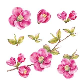 Incrível coleção de flores da primavera.