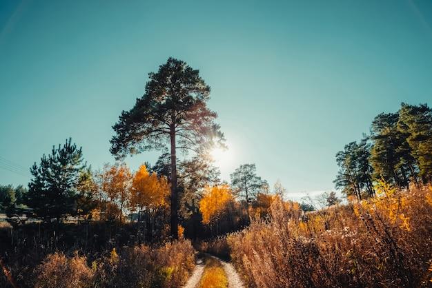 Incrível paisagem cênica no início da manhã na floresta de outono.