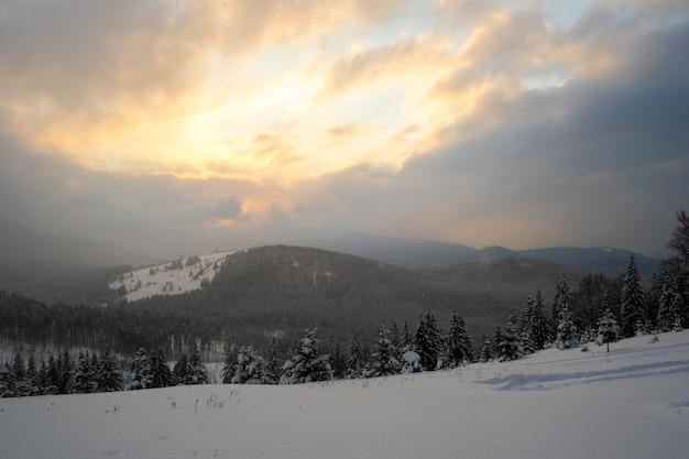 Incrível paisagem de inverno com pinheiros de floresta coberta de neve em montanhas frias e nebulosas ao nascer do sol.