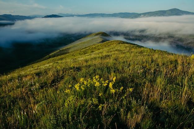 Incrivelmente bela paisagem de nevoeiro no topo das colinas florescendo.