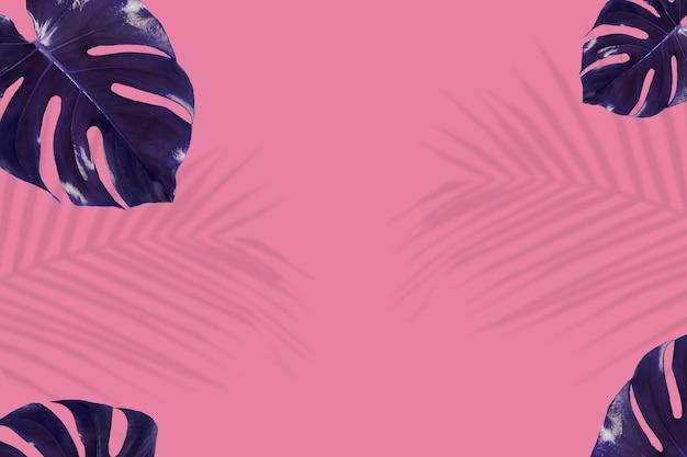 Indigo monstera folhas em fundo rosa