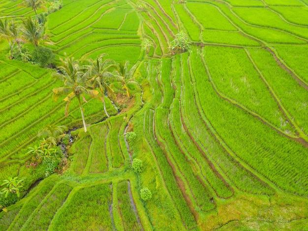 Indonésia. ilha de bali. terraços de campos de arroz. vista aérea