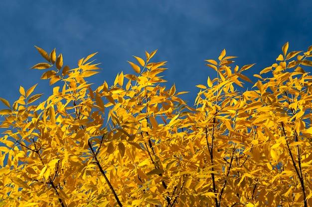 Influência e impacto da temporada de outono na natureza, por exemplo, de árvores ou outras plantas, mudanças na aparência das plantas sob a influência de fenômenos naturais, closeup