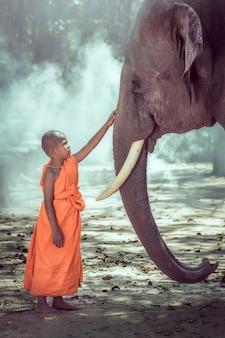 Iniciante monge budista sendo compassivo elefante, surin, tailândia